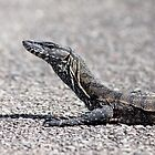 ~ Heath Goanna ~ by Leeo