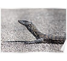 ~ Heath Goanna ~ Poster