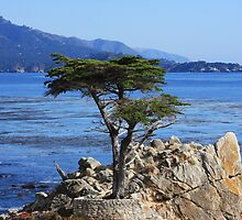Defiance (Cypress Tree) by ANDREW ROMER