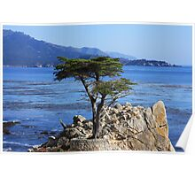Defiance (Cypress Tree) Poster