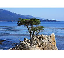 Defiance (Cypress Tree) Photographic Print