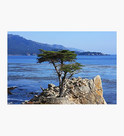 Defiance (Cypress Tree) Photographic Print