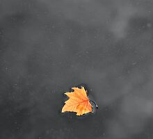 Autumn Stays Afloat  by Luis Miguel