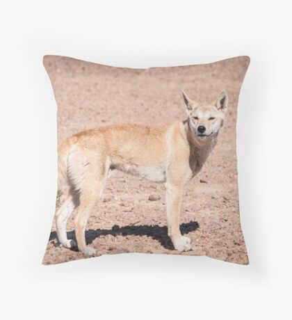 Dingo (Canis lupus dingo) Throw Pillow