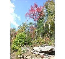 Autumn Trees And Mountain Rocks  Photographic Print