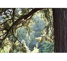 View Through The Trees Photographic Print