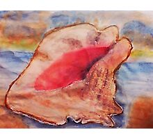The Conch shell #2, watercolor Photographic Print