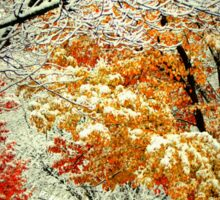 Snow Covered Fall Trees in MIchigan Sticker