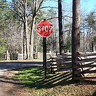 Rustic Park Stop Sign in West Virginia by dww25921
