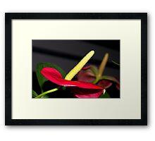 Flower ..unknown origin....... Framed Print