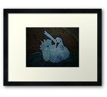 Tropic Bird Framed Print