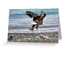 Bald Eagle And Seagulls Greeting Card
