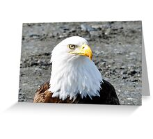 Bald Eagle Bust Greeting Card