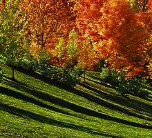 Summer Sliding Into Autumn... by Laurie Minor