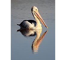 """""""Upon Reflection - A Pelican"""" Photographic Print"""