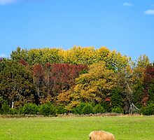 Autumn Grazing by Sharon Woerner