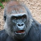 Gorilla expression by zzsuzsa