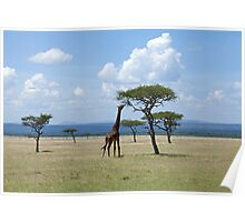 Giraffe on the Masai Mara Poster