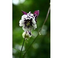 Leaning Flower Photographic Print