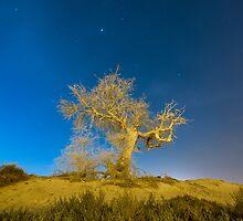 Ghost Tree by Sebastian Opitz
