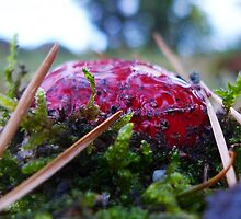 Red shroom rising by KanaShow
