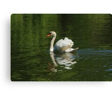 Swan in green Canvas Print