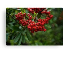 Christmas Red Berries Canvas Print