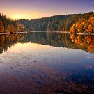 Forest Lake by Delfino