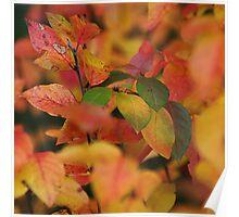October. VI Poster