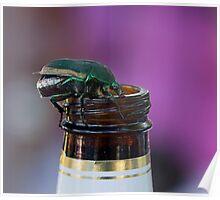 Beer Bottle Beetle Poster