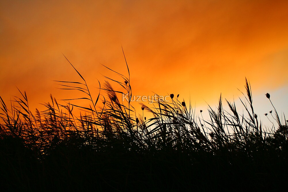 Whispering Reeds At Smokey Sunset by Kuzeytac