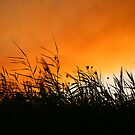 Whispering Reeds At Smokey Sunset by Kuzeytac
