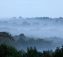 Morning Mist and Trees by Sue Robinson