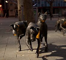 Canberra Dogs by Joseph Miller