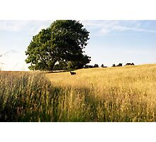 Indy's Field of Dreams. Photographic Print
