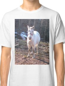 Pretty White Horse Standing in a Small Field Classic T-Shirt