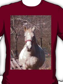 Friendly Horse Coming to Visit Attractive Camera Guy T-Shirt