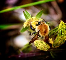 Abeille by Wintermute69