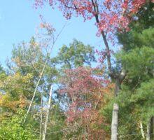 Pretty Rustic Appalachia Scene Rock & Trees Sticker