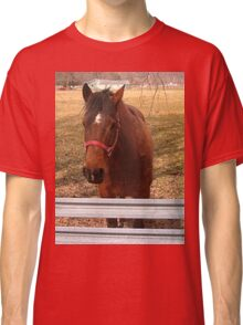 Pretty Brown Horse by a Fence in West Virginia Classic T-Shirt