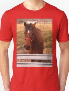 Pretty Brown Horse by a Fence in West Virginia T-Shirt