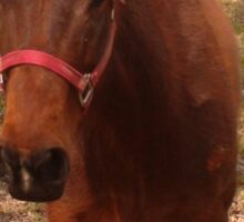 Pretty Brown Horse by a Fence in West Virginia Sticker