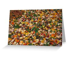Autumn, Colours, Sheffield Park Greeting Card