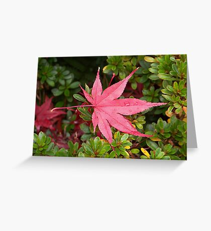 Japanese Maple Leaf Greeting Card