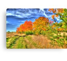 Fall is here. Canvas Print