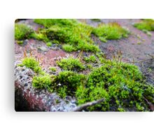Tiny World Canvas Print