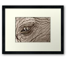 Wise Eye Framed Print