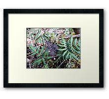 Purpley Fern Framed Print