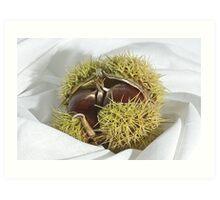 Chestnut Art Print