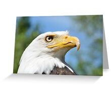 Head of American Eagle Greeting Card
